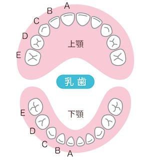 乳歯の歯式