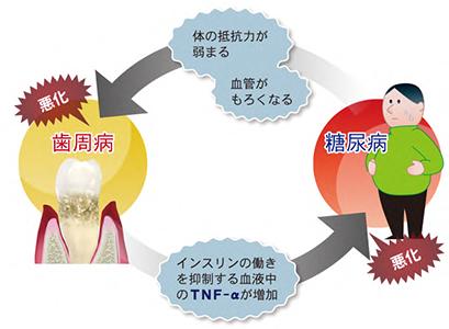 日本臨床歯周病学会 より